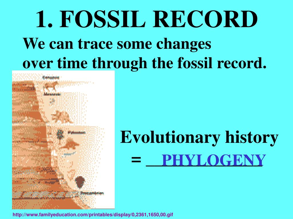 1. FOSSIL RECORD