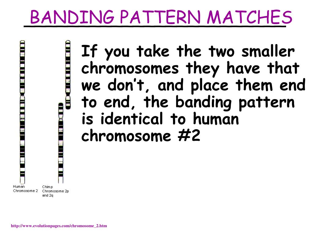 BANDING PATTERN MATCHES