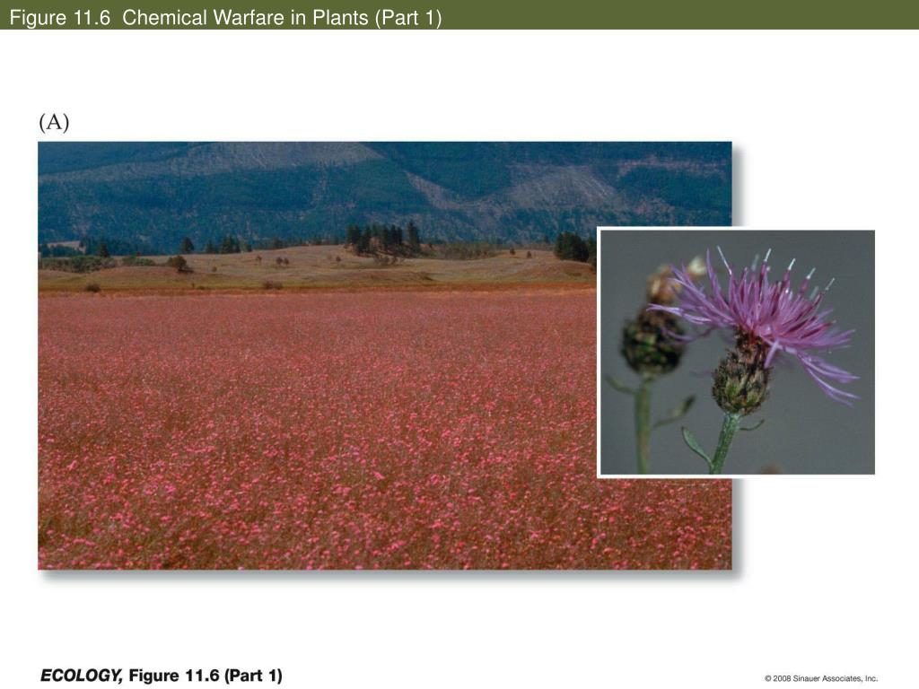 Figure 11.6  Chemical Warfare in Plants (Part 1)