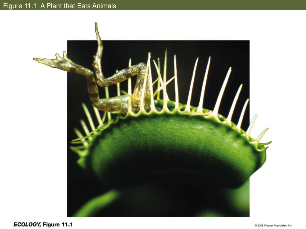 Figure 11.1  A Plant that Eats Animals