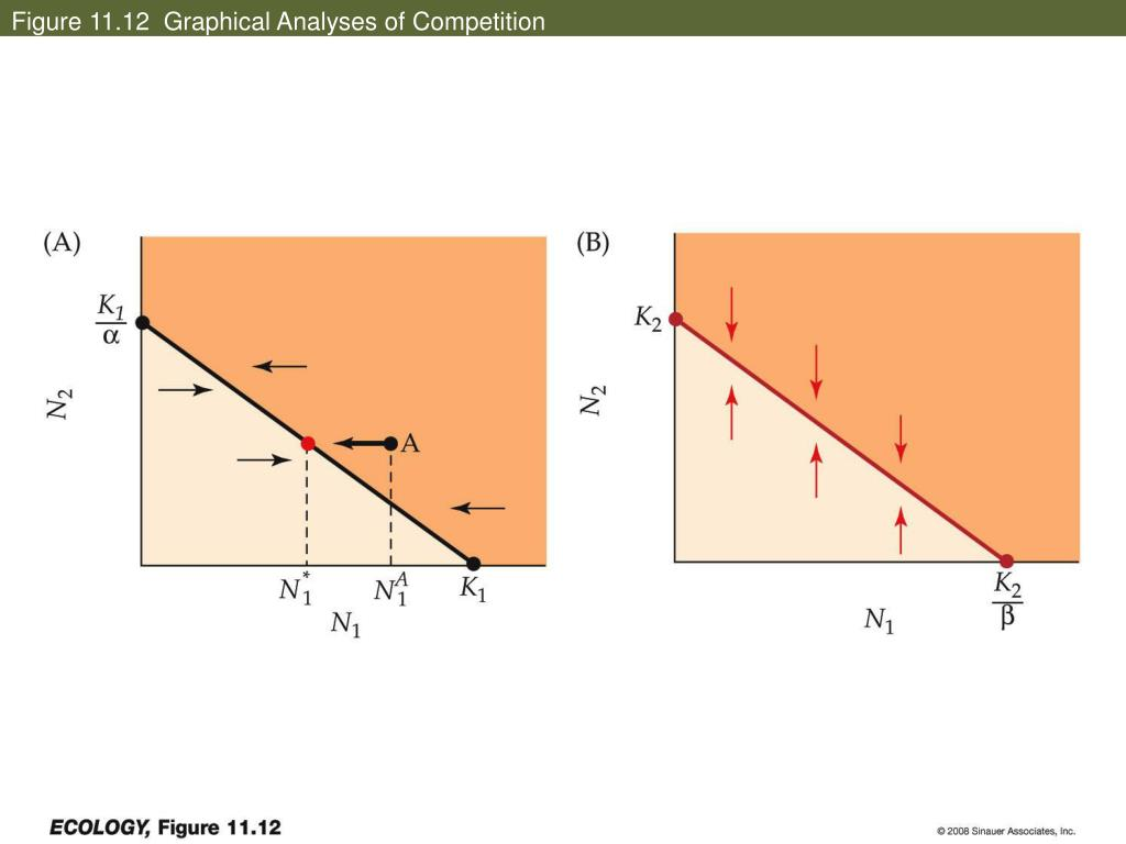 Figure 11.12  Graphical Analyses of Competition
