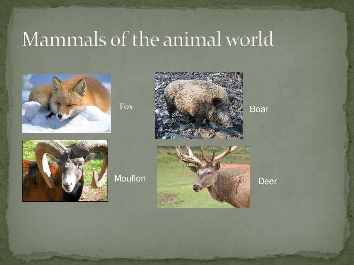 Mammals of the animal world