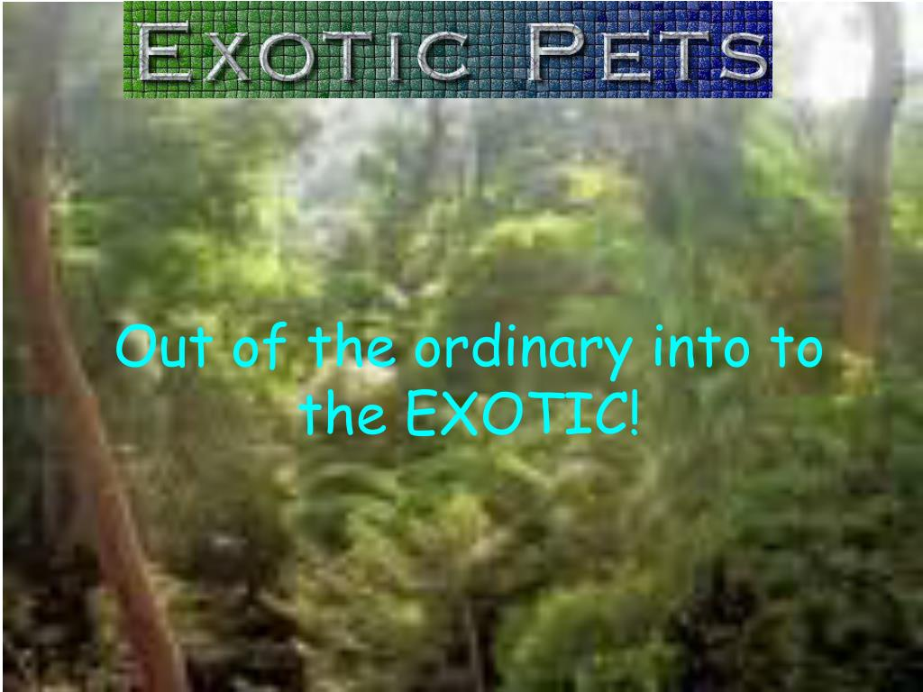Out of the ordinary into to the EXOTIC!