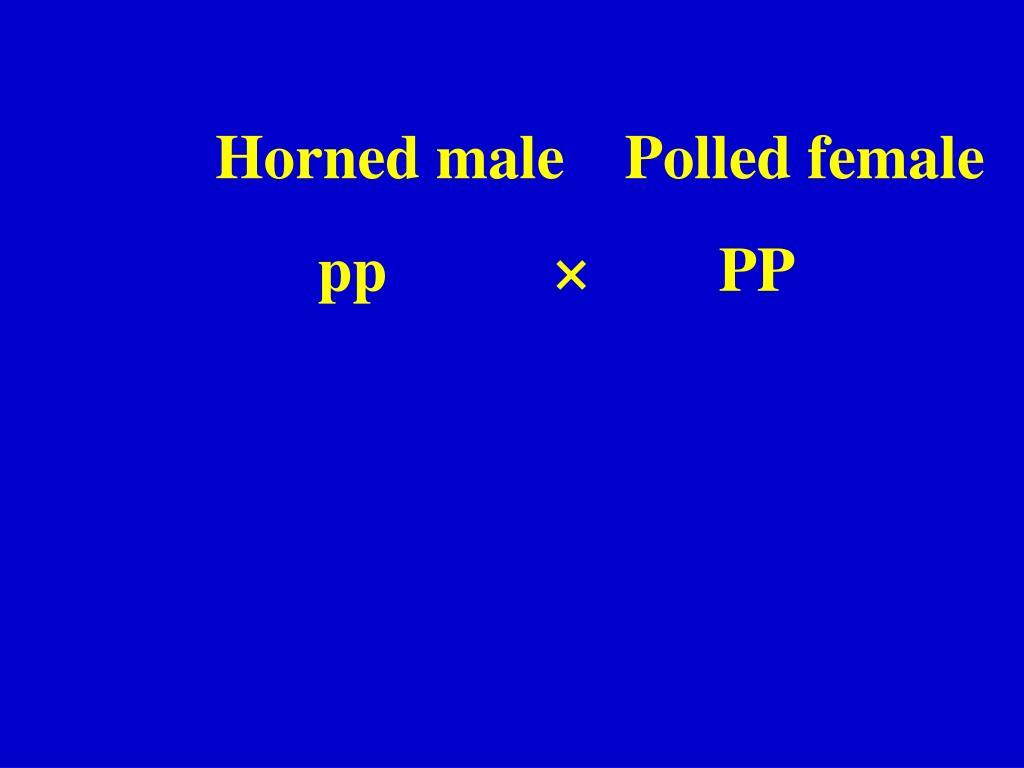 Horned malePolled female