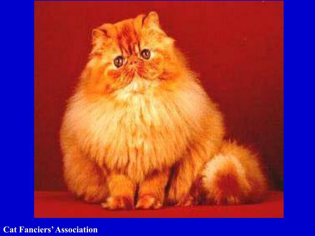 Cat Fanciers' Association