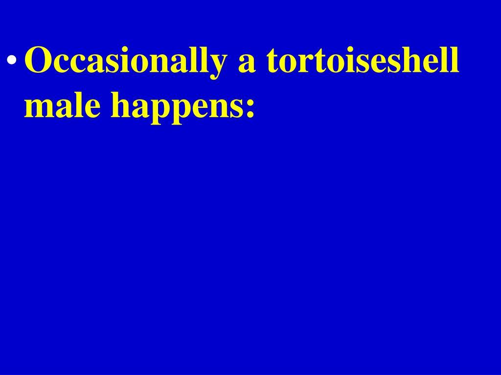 Occasionally a tortoiseshell male happens:
