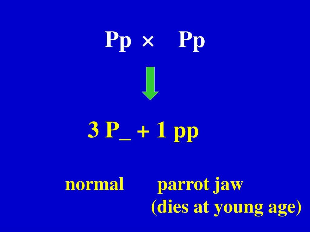 Pp ×  Pp