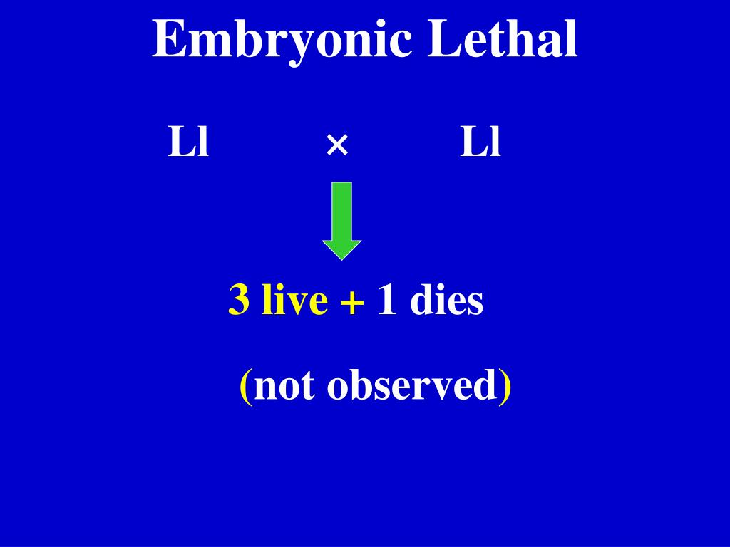 Embryonic Lethal