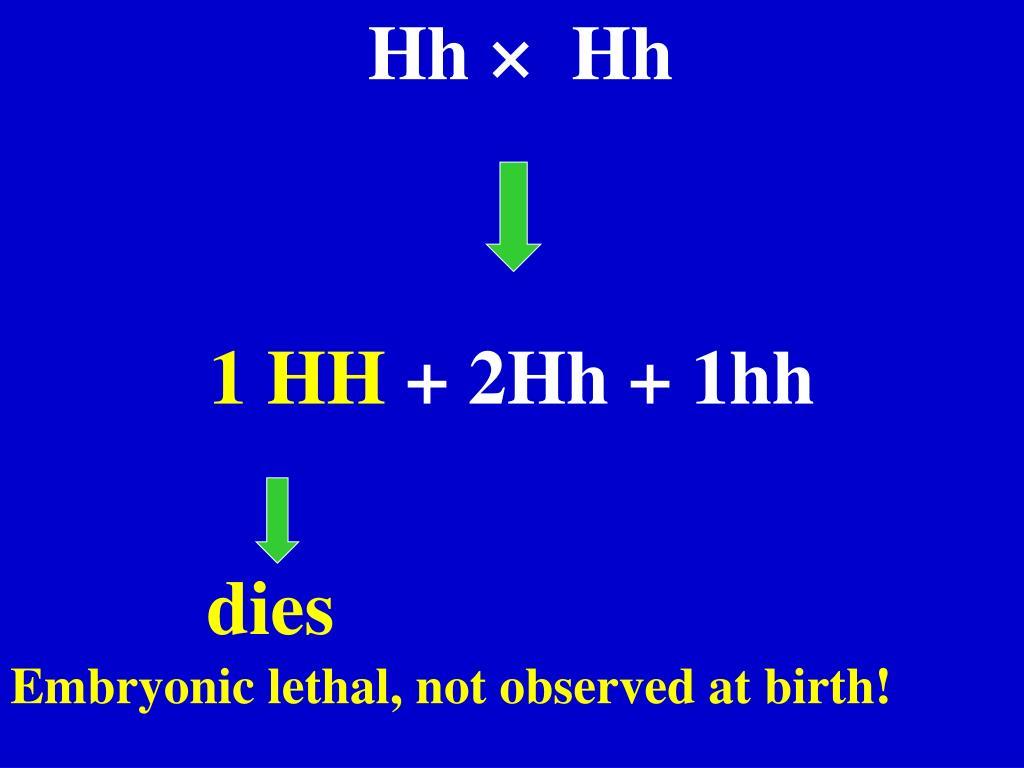 Hh ×  Hh