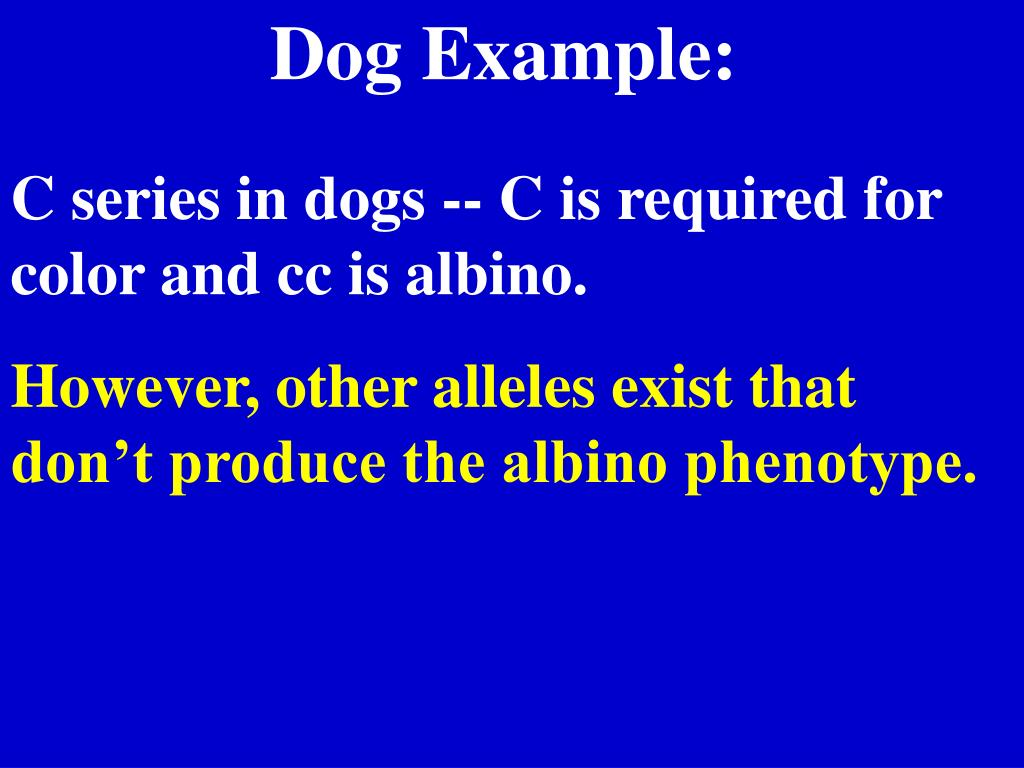 Dog Example: