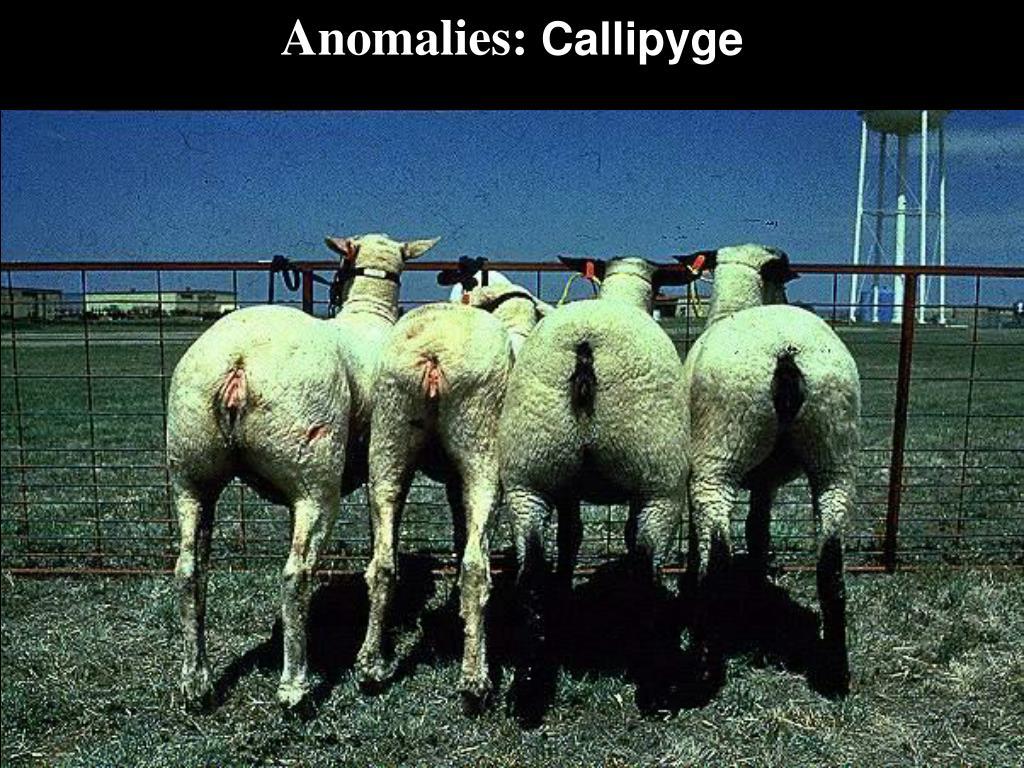 Anomalies: