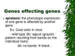 genes effecting genes