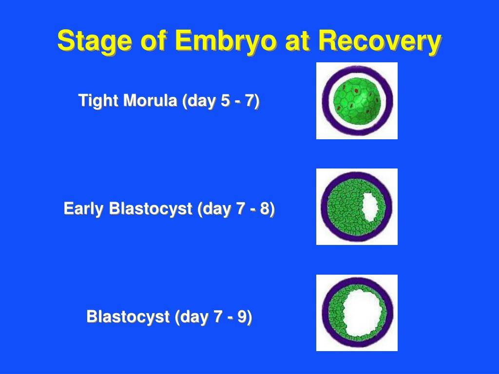 Stage of Embryo at Recovery