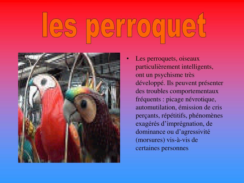 les perroquet
