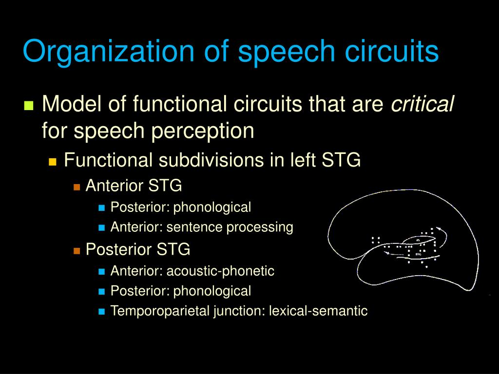 Organization of speech circuits