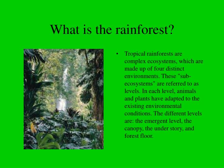 What is the rainforest l.jpg