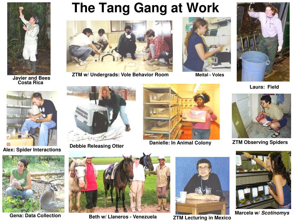ZTM w/ Undergrads: Vole Behavior Room