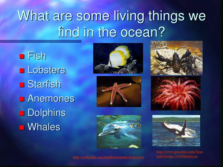 What are some living things we find in the ocean?