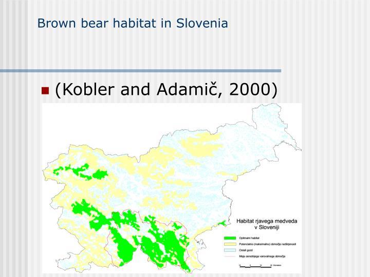 Brown bear habitat in Slovenia