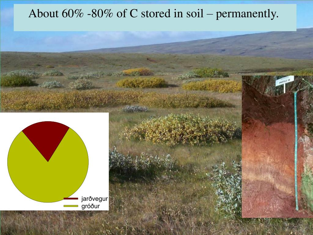 About 60% -80% of C stored in soil – permanently.