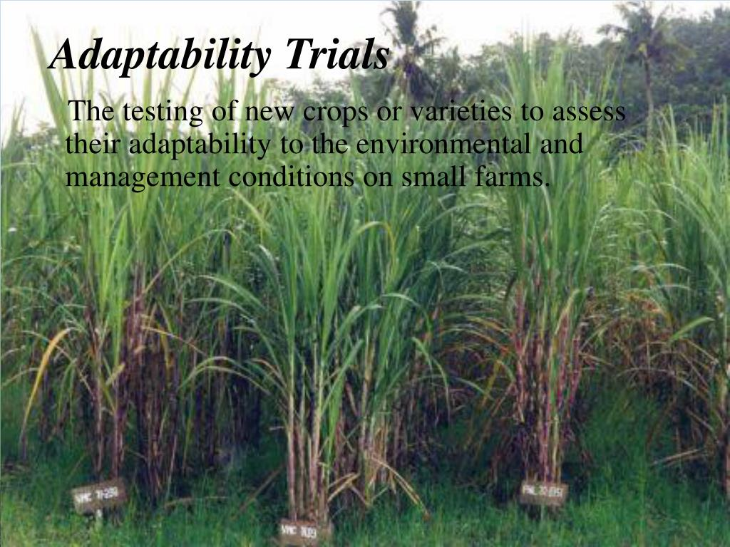 Adaptability Trials