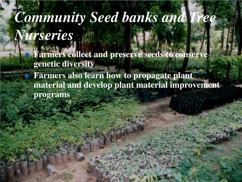 Community Seed banks and Tree Nurseries