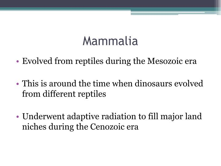 Mammalia