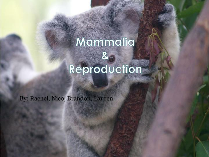 Mammalia reproduction