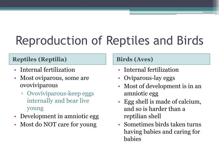 Reproduction of Reptiles and Birds