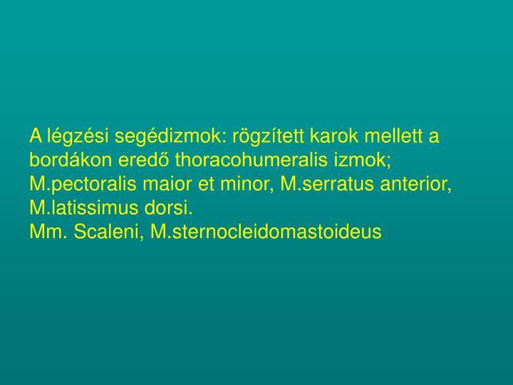 A légzési segédizmok: rögzített karok mellett a bordákon eredő thoracohumeralis izmok;