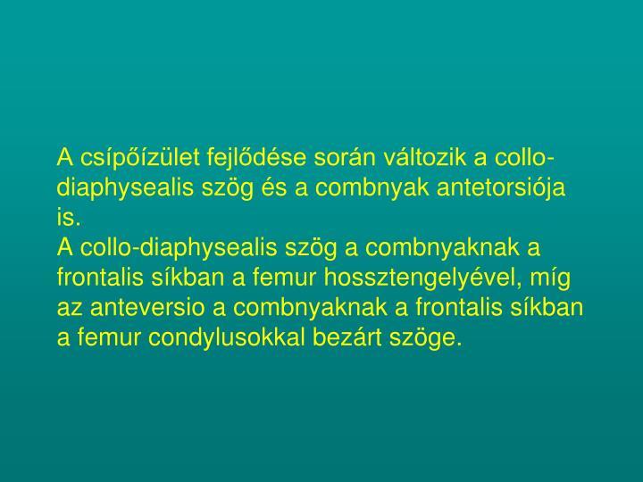 A csípőízület fejlődése során változik a collo-diaphysealis szög és a combnyak antetorsiója is.