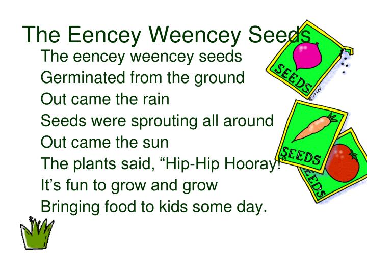 The Eencey Weencey Seeds