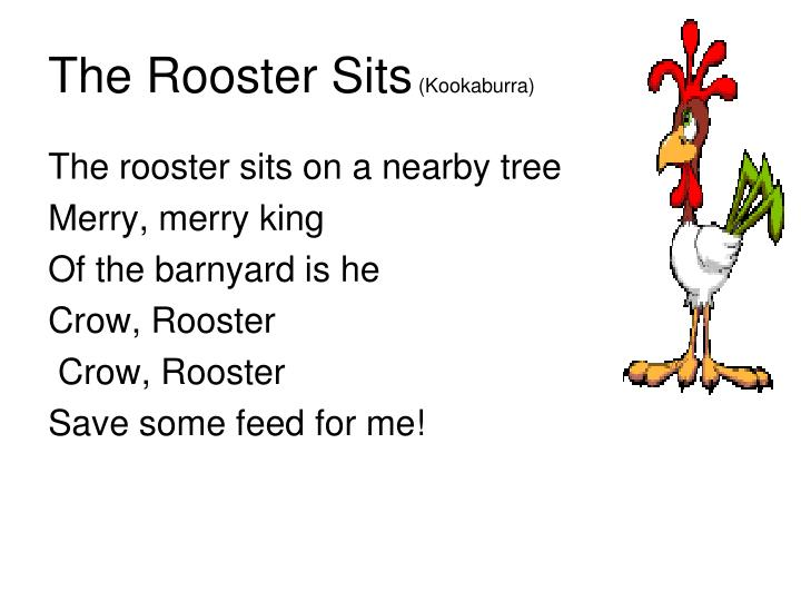 The Rooster Sits