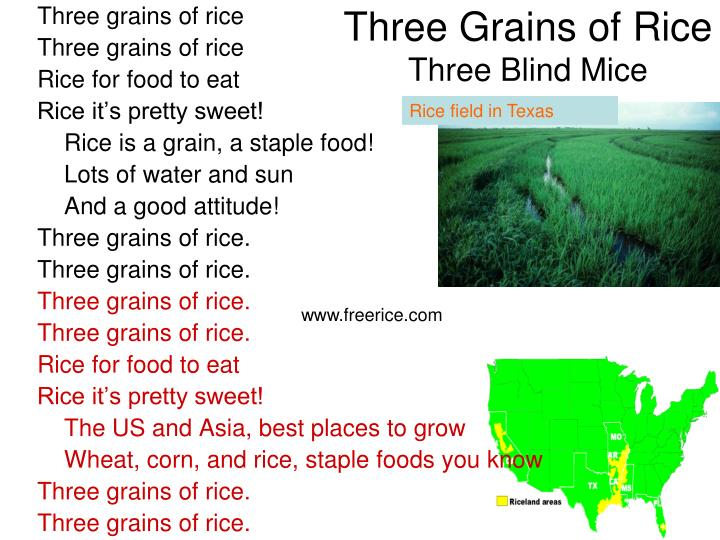 Three Grains of Rice