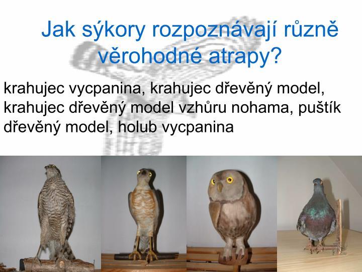 krahujec vycpanina, krahujec dřevěný model, krahujec dřevěný model vzhůru nohama, puštík dřevěný model, holub vycpanina