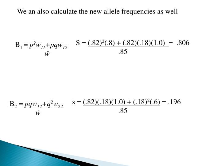 We an also calculate the new allele frequencies as well