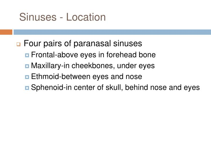 Sinuses - Location