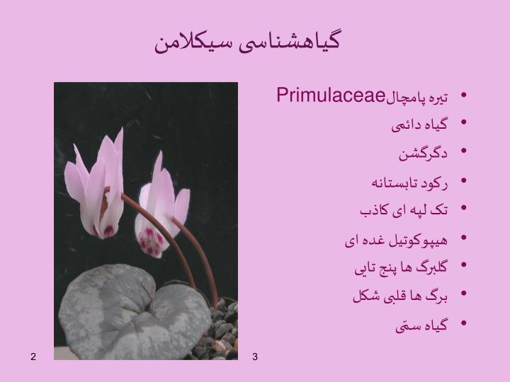گیاهشناسی سیکلامن