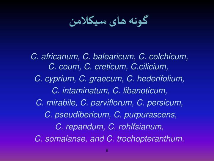 گونه های سیکلامن