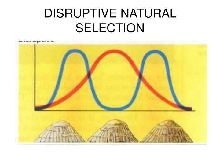 DISRUPTIVE NATURAL SELECTION