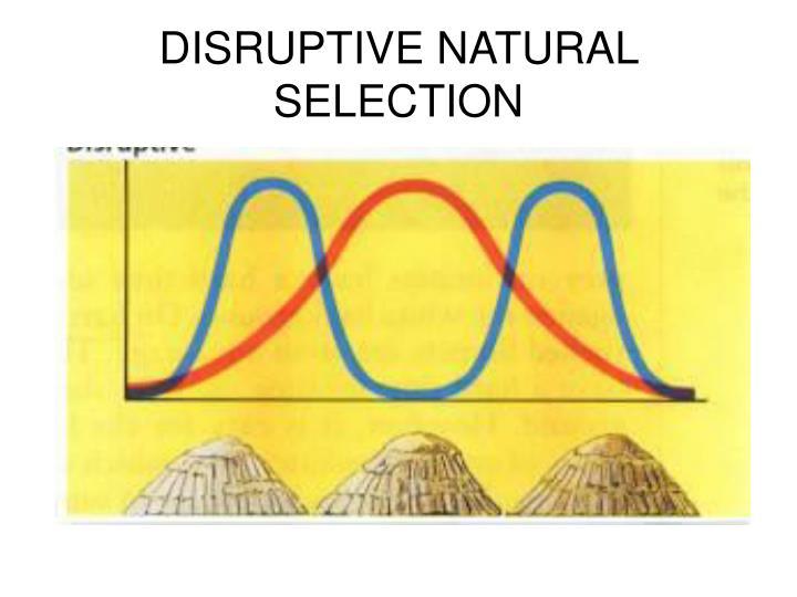 DISRUPTIVE NATURAL SELECTION