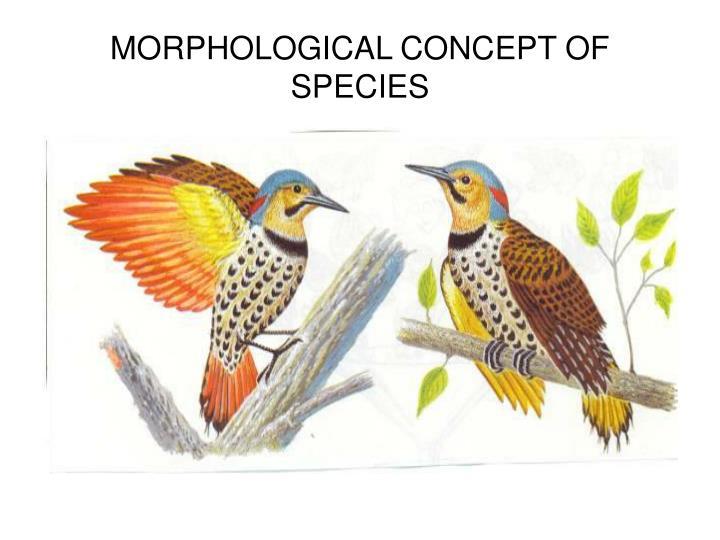 MORPHOLOGICAL CONCEPT OF SPECIES