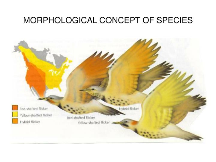 MORPHOLOGICAL CONCEPT OF SPECIES
