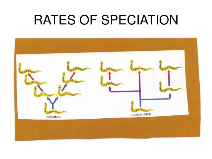 RATES OF SPECIATION