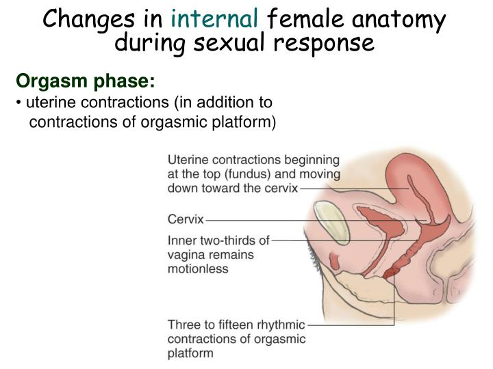 Female sexual arousal during anesthesia