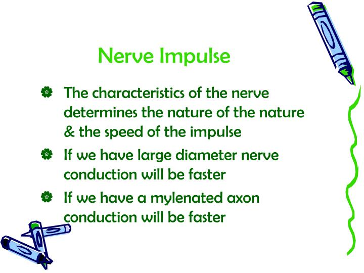 Nerve Impulse
