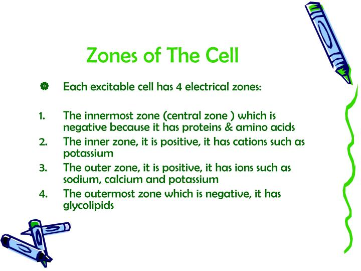 Zones of The Cell