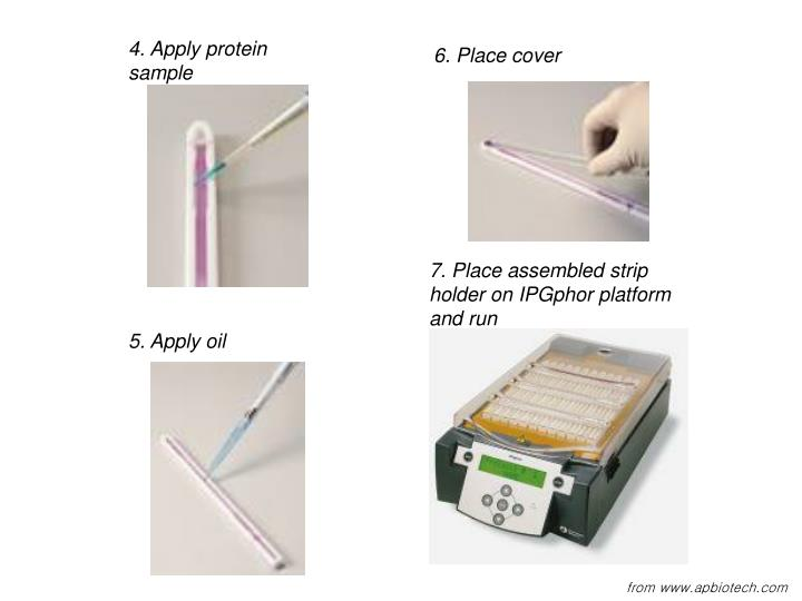 4. Apply protein sample
