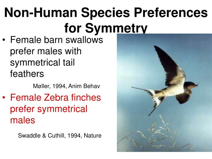 Non-Human Species Preferences for Symmetry