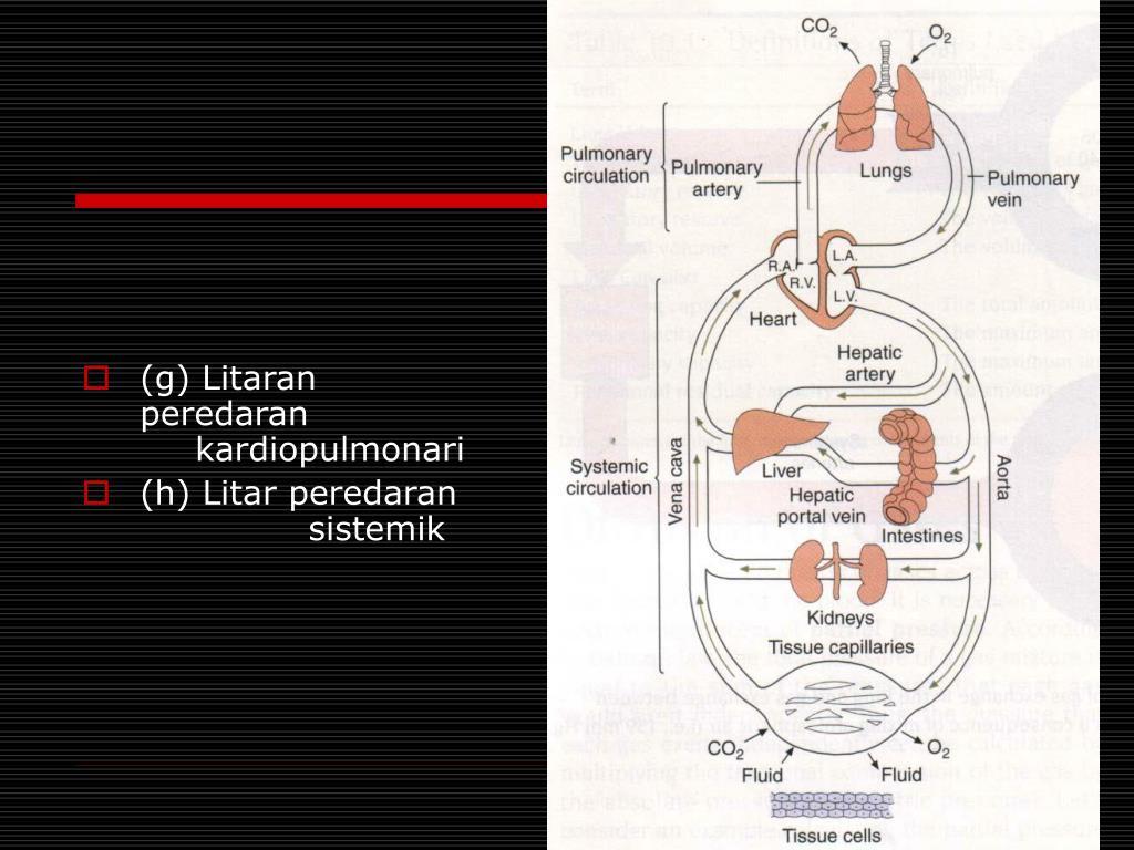 (g) Litaran peredaran kardiopulmonari